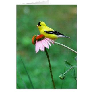 ConeflowerのGoldfinch カード