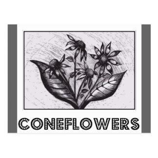 Coneflowers ポストカード