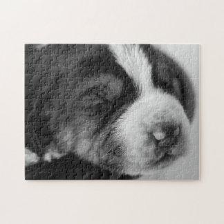 Coonhoundの子犬 パズル