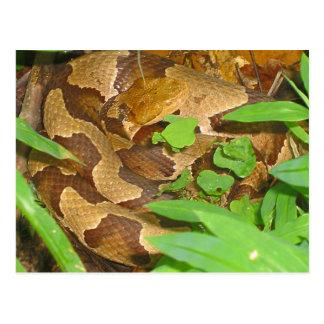 Copperheadのヘビ ポストカード