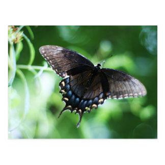 "Coresselの生産による""papillon de jardin"" ポストカード"
