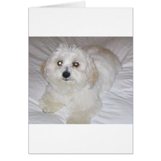 coton laying.png カード