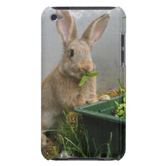 CottontailウサギのiTouchの場合 Case-Mate iPod Touch ケース