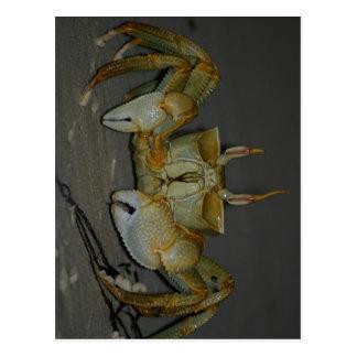crabbyビット… ポストカード