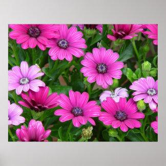Cranesbillのゼラニウム(ピンクの花)プリント/ポスター ポスター