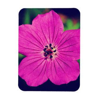 Cranesbillの紫色の花 マグネット