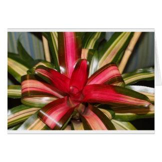 Cristmasの弓植物 カード