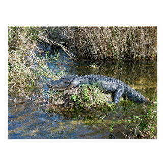 Croc ポスター