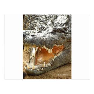 Crocodile.jpg ポストカード