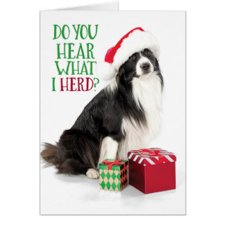 Cute Herding Border Collie With Christmas Gifts カード