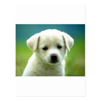 cute-puppy-dog-wallpapers.jpg ポストカード