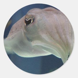 Cuttlefishのステッカー ラウンドシール