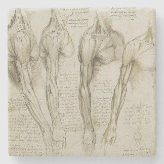 Da Vinciの人間の腕の解剖学 ストーンコースター