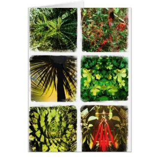 Daliの植物 カード