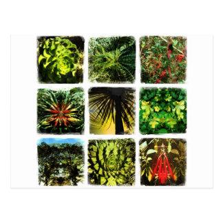 Daliの植物 ポストカード
