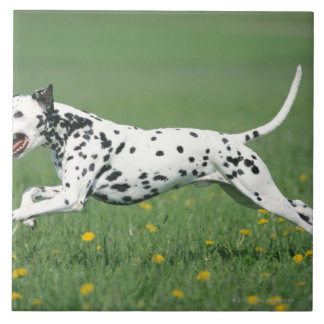 Dalmatianランニング タイル