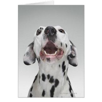 Dalmatian犬の閉めて下さい カード