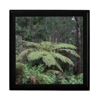 Dandenongは雨林、ビクトリア、オーストラリア2及びます ギフトボックス