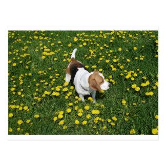 dandilions.pngのビーグル犬 ポストカード