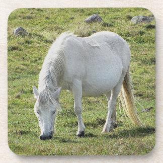 Dartmoorの子馬のGrazeingの白い夏 コースター