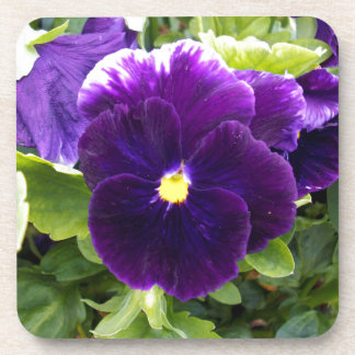 Deep_Purple_Pansy、_ コースター