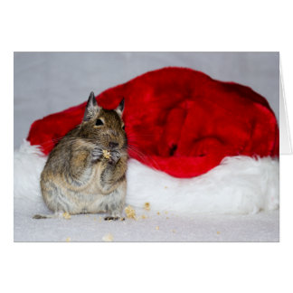 Degu及びサンタの帽子のクリスマス カード