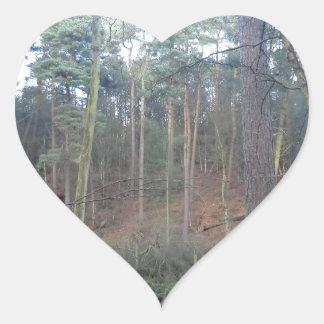 Delamereの森林、チェシャーの黒いコケ ハートシール