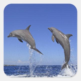 Delfin、Delphin、総体のTuemmlerのハンドウイルカ属3 スクエアシール