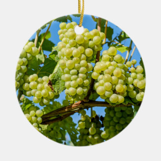 Delicious growing green grapes bunch & blue sky セラミックオーナメント