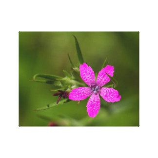 Deptfordのピンクの野生の花のキャンバスのプリント キャンバスプリント