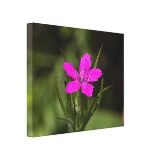 Deptfordのピンクの野生の花の花のキャンバスのプリント キャンバスプリント