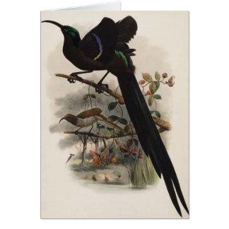 DGエリオット- Epimachusのspeciosus -素晴らしい鎌手形 カード