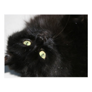 Diabola悪魔の猫 ポストカード