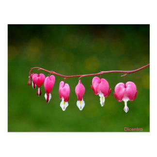 Dicentra -ピンクのハートの形の花柄の郵便はがき ポストカード
