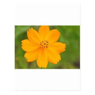 Diversos Florのamarela はがき