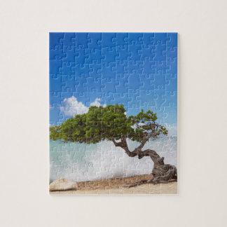 Divi Diviの木、ワシのビーチ、アルバ、カリブ ジグソーパズル