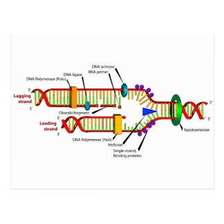 DNAの写し ポストカード