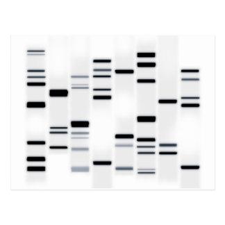 DNAは白で芸術の黒をコードします ポストカード