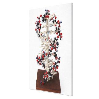 DNAモデル キャンバスプリント