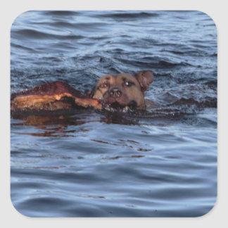 Dog Swimming in River スクエアシール