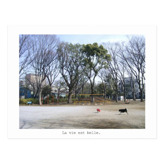 dogs in the park ポストカード