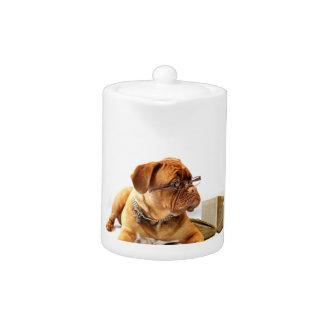 dogue de bordeaux犬の身に着けているガラス