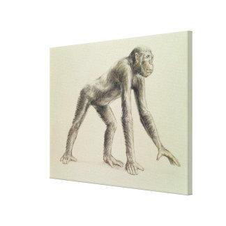 Dryopithecus Africanus キャンバスプリント