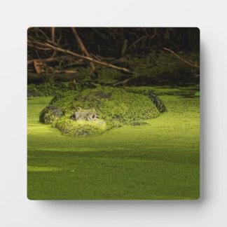 Duckweed -自然の写真に潜んでいるわに フォトプラーク