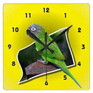 Dusky先頭に立たれたConureのオウム動物 スクエア壁時計