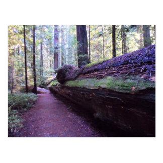 Dyerville巨大なフンボルトのレッドウッドの州立公園 ポストカード