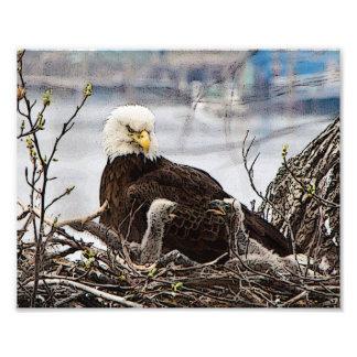 eagletsの大人の白頭鷲 フォトプリント