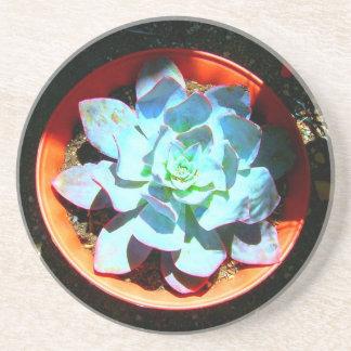 Echeveriaの砂漠の植物のSucculent コースター