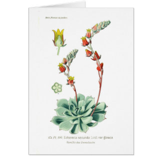 Echeveriaのsecunda カード