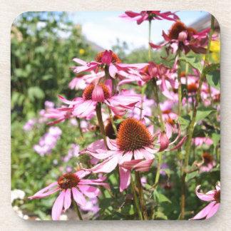 Echinaceaは、紫色の花閉まります コースター